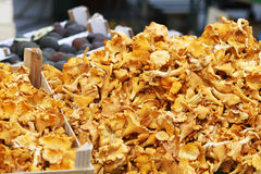 Golden Chanterelle fungus. Pile of Golden Chanterelle fungus for sale on market stall Stock Photography