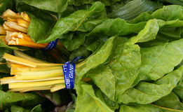 Golden Chard Stock Images