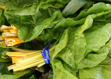 Golden Chard Royalty Free Stock Image