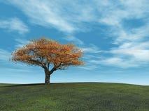 Golden Cherry Tree Stock Photo