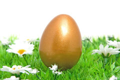 Golden chicken easter egg on grass Royalty Free Stock Images
