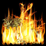 Golden Chinese Dragon With Fire Stock Photos