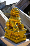Golden Chinese lion statue Royalty Free Stock Image