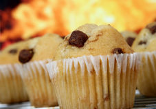 Golden chocolate chip muffins baked in the kitchen Stock Photos