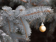 Golden Christmas ball. Golden Christmas ball on fir branch covered with snow on a background of trees Stock Photo