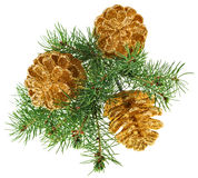 Golden Christmas cones with fir branch Royalty Free Stock Photography