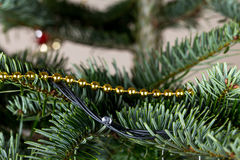 Golden christmas garland on pine tree branch. Royalty Free Stock Photography