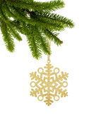 Golden Christmas snowflake on ribbon on green tree branch isolat. Ed on white background Stock Images