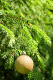 Golden Christmas tree ball on the green Christmas tree. Shallow depth-of-field Stock Photography
