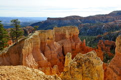 Golden cliffs of Bryce Canyon National Park, Utah Royalty Free Stock Photo