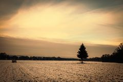 Golden cloudy sunset at a snowy field with a single tree in the european alps on a cold day in winter. Highlighted by the sun stock photo