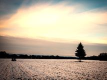 Golden cloudy sunset at a snowy field with a single tree in the european alps on a cold day in winter. Highlighted by the sun royalty free stock images