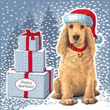 Dog sitting in Santar hat next to gift. Golden Cocker Spaniel Dog sitting in Santa hat next to gift. Vector Stock Photo