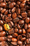 Golden coffee bean Royalty Free Stock Images