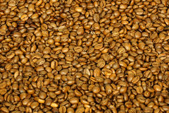 Golden coffee beans for background and texture Stock Photography