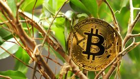 Golden Coin Created As Most Popular Digital Currency Bitcoin stock video