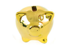 Golden coin pig Stock Image