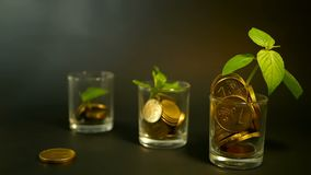 Golden coins in glass and green leaf of sprout on black background. Success of finance business, investment, ideas. Management efficiency. Golden coins in glass stock video footage