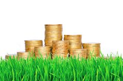 Golden coins in green grass over white Stock Photo