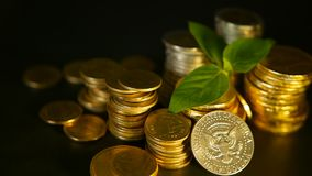 Golden coins and green leaf of sprout on black background. Success of finance business, mortgage and banking concepts. Golden coins and green leaf of sprout on stock video footage