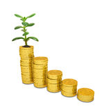 Golden coins with money tree on white Stock Photos