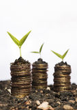 Golden coins in soil with young plant Stock Photography