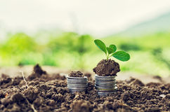 Golden coins in soil with young plant. Money growth concept. Royalty Free Stock Photography