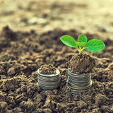 Golden coins in soil with young plant. Money growth concept. Royalty Free Stock Images