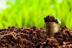 Golden coins in soil Royalty Free Stock Photos