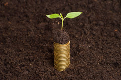 Golden coins in soil with young plant. Money growth concept. Stock Image
