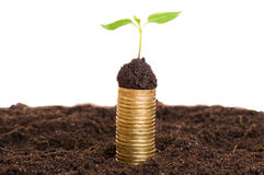 Golden coins in soil with young plant. Money growth concept. Royalty Free Stock Photos
