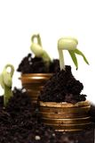Golden coins in soil with young plant. Money Stock Photo