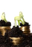 Golden coins in soil with young plant. Money Stock Photography