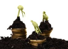 Golden coins in soil with young plant. Money Stock Images
