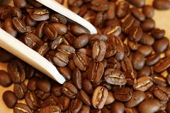 Golden color of coffee beans Royalty Free Stock Photo