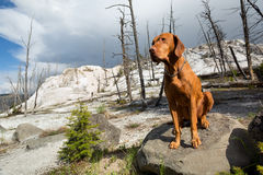 Golden color dog in wasteland Royalty Free Stock Photography