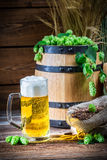 Golden color of light beers Stock Images