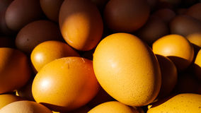Golden color of shell eggs Royalty Free Stock Image