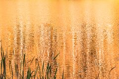 Golden color water lake from sunset stock photos