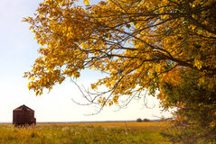 Golden colored autumn tree Royalty Free Stock Photography
