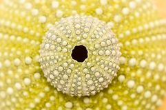 Sea urchin decorated with stones Stock Images