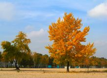 Golden colors of autumn Royalty Free Stock Photography