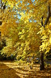 Golden colors of Fall Royalty Free Stock Image
