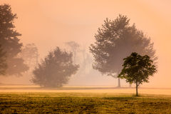 Golden colors shine through morning mist Stock Images