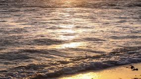 Golden colors on the waves. Sunrise. Ocean. Beautiful golden colors of the sunset in a tropical beach, waves crashing against the white sand of this idyllic stock video footage