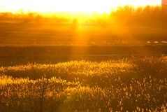 Golden colours of evening sun. Golden colors of the evening sun lighting up the winter fields and reed beds royalty free stock photos