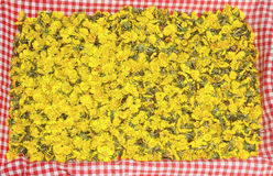 Golden coltsfoot blossoms, natural homespun remedy on red checke Stock Images