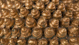 Golden cones Stock Image