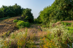 Golden Coreopsis in an abandoned railway Stock Images