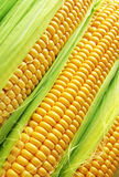 Golden corn Stock Photography